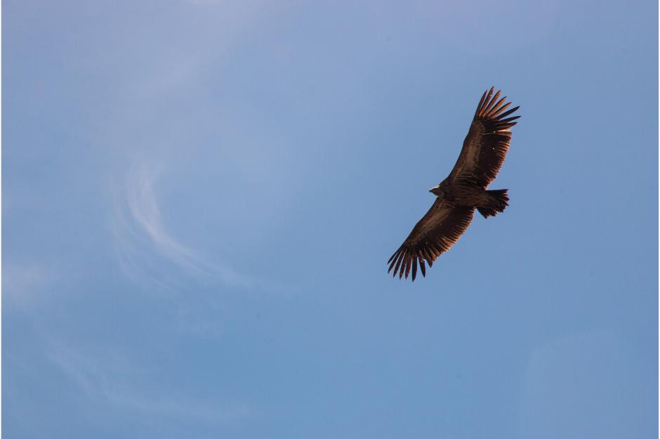 Video | Nechte si narůst křídla